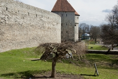 Tallin, fragment murów obronnych