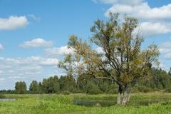 Biebrzański PN, okolice Jasionowa Dębowskiego