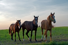 Konie - piękno samoistne