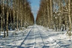 Bory Tucholskie zimą - okolice m. Okoniny (2007)
